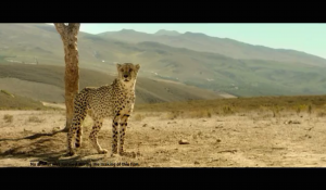 Big Bazaar – Cheetah